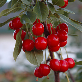 Edible Plant Photo